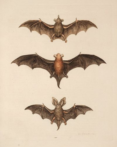 Graphicsfairybats2